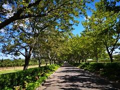 Stellenbosch (Toni Kaarttinen) Tags: southafrica africa cape capetown travel travelling holiday wanderlust westerncape wine winelands stellenbosch
