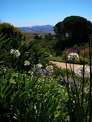 Hidden Valley (Toni Kaarttinen) Tags: southafrica africa cape capetown travel travelling holiday wanderlust westerncape wine winelands stellenbosch hiddenvalley hidden valley flowers pond winehouse