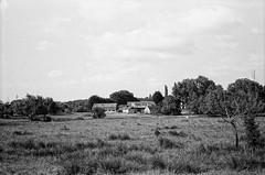 Ricoh 500RF - Fomapan 100 (8) (meniscuslens) Tags: farm field trees grass linslade bedfordshire vintage film camera ricoh 500rf fomapan mono monochrome bw bnw