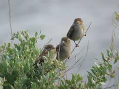 IMG_6164 (jesust793) Tags: pájaros birds naturaleza nature