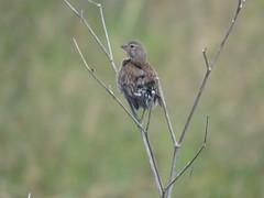 IMG_6145 (jesust793) Tags: pájaros birds naturaleza nature