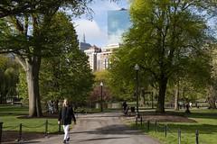 Walking the park (RubénRamosBlanco) Tags: humanos humans chica girl rubia blonde paseo walk parque park publicgarden jardínpúblico ciudades cities boston mass usa