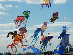 Assorted Kites (mikecogh) Tags: semaphore kitefestival kites variety whale squid octopus colour color