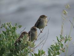 IMG_6165 (jesust793) Tags: pájaros birds naturaleza nature