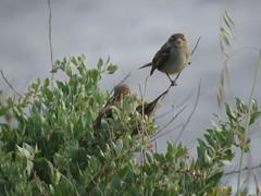 IMG_6159 (jesust793) Tags: pájaros birds naturaleza nature