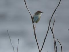 IMG_6154 (jesust793) Tags: pájaros birds naturaleza nature