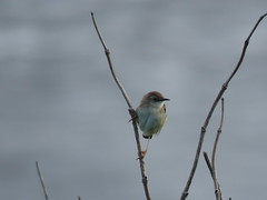 IMG_6151 (jesust793) Tags: pájaros birds naturaleza nature
