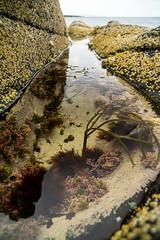 Natürliches Aquarium (Joachim S.) Tags: scotland meer isleofskye unitedkingdom pflanzen fels portree tang schottland