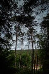 Rhineland-Pfalz (efsb) Tags: rhinelandpfalz rheinlandpfalz germany sonyrx100mk3 wald forest palatinate dahn hauenstein weinstrasse