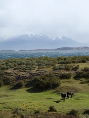 Sea and mountain - tierra del fuego (bianca.tomasi92) Tags: sea water mountain nature wild explore rtavel sud pole horses national outside