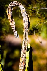 Nature's Flow (Thomas Hawk) Tags: america arizona desertbotanicalgarden papagopark usa unitedstates unitedstatesofamerica cacti cactus desert phoenix fav10