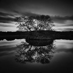 Reflection (frodi brinks photography) Tags: blackandwhite mývatn myvatn frodibrinks iceland tree