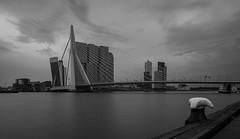 Erasmusbridge b/w (andreasmally) Tags: black white bridge brücke erasmusbridge erasmusbrug netherlands nederlande niederlande holland rotterdam