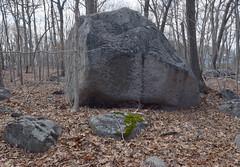 erratic, Quincy granite (ophis) Tags: quincygranite erratic boulder