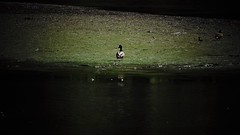 Instants (Elena SGnight) Tags: duck ducks bird nature natural landscape views animal animals cold winter lake river forest mountain swim outside explore contrast blue green close closer zoom details