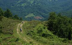 dereköy - sermayecik köyü
