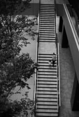 June 9, 2019_8 (Satoshi Kondo) Tags: monochrome bw bnw blackandwhite blackandwhitephotography blackandwhitephoto bnwphoto bwphoto bnwphotography bwphotography blackandwhitepoto blackandwhitepotography filmphotography filmphoto filmcamera film filmpoto filmpotography leica leicam3 leicaphoto leicaworld kodak kodaktx400 モノクロ 白黒 フィルム フィルム写真 フィルムカメラ