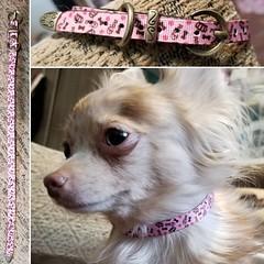 44683217_1874860955944097_4394572595526107136_o_1874860949277431 (ToutEnBronze) Tags: chien chat collier québec handmade collar dog cat