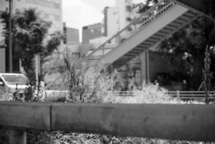 June 9, 2019_1 (Satoshi Kondo) Tags: monochrome bw bnw blackandwhite blackandwhitephotography blackandwhitephoto bnwphoto bwphoto bnwphotography bwphotography blackandwhitepoto blackandwhitepotography filmphotography filmphoto filmcamera film filmpoto filmpotography leica leicam3 leicaphoto leicaworld kodak kodaktx400 モノクロ 白黒 フィルム フィルム写真 フィルムカメラ