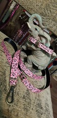 44725795_1874924129271113_6923817684396146688_o_1874924125937780 (ToutEnBronze) Tags: chien chat collier québec handmade collar dog cat