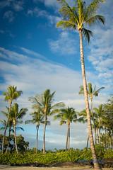 DSC_7311 (dtolly1996) Tags: bigisland hawaii2019 hawaii