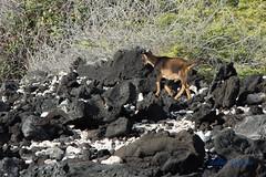 DSC_7243 (dtolly1996) Tags: bigisland hawaii2019 hawaii
