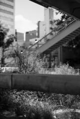 June 9, 2019_2 (Satoshi Kondo) Tags: monochrome bw bnw blackandwhite blackandwhitephotography blackandwhitephoto bnwphoto bwphoto bnwphotography bwphotography blackandwhitepoto blackandwhitepotography filmphotography filmphoto filmcamera film filmpoto filmpotography leica leicam3 leicaphoto leicaworld kodak kodaktx400 モノクロ 白黒 フィルム フィルム写真 フィルムカメラ