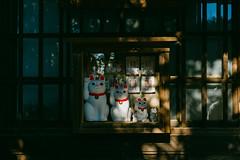 Cats. (t-a-i) Tags: japan leica leicam10p m10p setagaya tokyo voigtlander voigtlander35mmf14 voigtlandernoktonclassicsc35mmf14 voigtländernoktonclassicsc35mmf14 voigtländer voigtländer35mmf14 tokyoprefecture