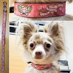 45104688_1887541454676047_3763097169041555456_o_1887541451342714 (ToutEnBronze) Tags: chien chat collier québec handmade collar dog cat
