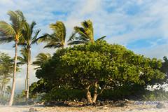 DSC_7314 (dtolly1996) Tags: bigisland hawaii2019 hawaii
