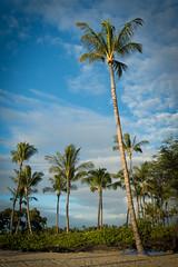 DSC_7313 (dtolly1996) Tags: bigisland hawaii2019 hawaii