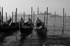 Gondolas Of Venice BW (Tom_Jones7) Tags: venice italia italy 2019 2k19 19 travel travelbug travelmore travelphotography travelphoto travelworld travelling trip bnw exploring exploringtheworld blackandwhite blackwhitelife blackwhite blackandwhitephotography blackwhitephoto bw monochrome canon contrast citylife water canal venezia