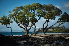 DSC_7301 (dtolly1996) Tags: bigisland hawaii2019 hawaii