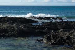 DSC_7259 (dtolly1996) Tags: bigisland hawaii2019 hawaii