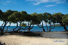 DSC_7249 (dtolly1996) Tags: bigisland hawaii2019 hawaii