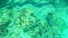 20180102_012113 (dtolly1996) Tags: bigisland hawaii2019 hawaii