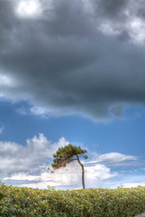 comme un bonsaï (patrick Thiaudiere, + 3,5 millions view) Tags: cloud nuage nuages clouds sky ciel storm orage tree arbre alone seul unique vert green blue bleu