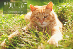 Cat in the Green Grass in Summer (Kseniya Polonskaya) Tags: cat cute summer grass green love funny spring care sun pets garden red nature flowers playing eyes meadow kitten animal outdoors domestic sunny rays young portrait kitty sweet small farm feline fur stare healthy adorable face field lovely mammal background home game yellow