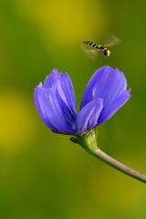Macro with a zoom (filippo rome) Tags: macro nature natura flowers fiori colors colori caffarella parcodellacaffarella lazio rome roma italy italia
