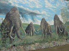 02 Mammoths