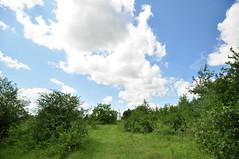 Mont César (Chaufglass) Tags: montcésar oise hautsdefrance picardie nature biotope natura2000 orchidées