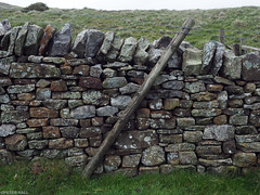 Stonewalling (peterphotographic) Tags: p5260065edwm olympus em5mk2 microfourthirds mft ©peterhall peakdistrict derbyshire nationalpark nationaltrust nt england uk britain wall stone damp wet post rural countryside field farm