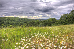 From the hill to the city (ArtGordon1) Tags: eppingforest yardleyhill clouds stormclouds june 2019 davegordon davidgordon daveartgordon davidagordon daveagordon artgordon1 meadow flowers