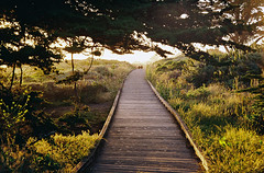 Boardwalk, Moonstone Beach (bingley0522) Tags: contaxiia zeissoptonsonnar50mmf20 kodakcolorplus200 cambria moonstonebeach boardwalk eveninglight autaut