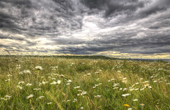 Passing Storm (ArtGordon1) Tags: eppingforest yardleyhill clouds stormclouds june 2019 davegordon davidgordon daveartgordon davidagordon daveagordon artgordon1 meadow flowers