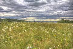 My view from the meadow (ArtGordon1) Tags: eppingforest yardleyhill clouds stormclouds june 2019 davegordon davidgordon daveartgordon davidagordon daveagordon artgordon1 meadow flowers