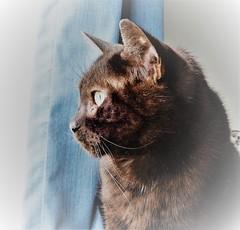 George (Molly Moult) Tags: cat indoors window profile black fur pet