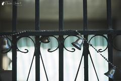 Ring Ring (Bright Ideas with Chan Udarbe) Tags: nikond7200 nikonmbd15 sigma1750mmf28exdcoshsm andoerqr60 blackrapidrssportversion2 hoodmanhoodeyeheyensgeyepiece peakdesignanchorlinksv4 phaseonecaptureonepro street outdoor object fun flickr colors color alcala pangasinan philippines