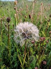 Grasslands [2] (paul_taberner_photography) Tags: grasslands