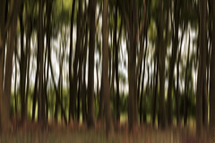 ICM Woodland (Paulie-W) Tags: icm intentionalcameramovement woods trees forest woodland abstract nature